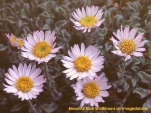 Beautiful Rare Wildflowers Screenshot